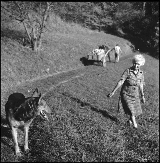La Clémence et son chien et son fils Marc rentrant le tombereau de betteraves de la Ra