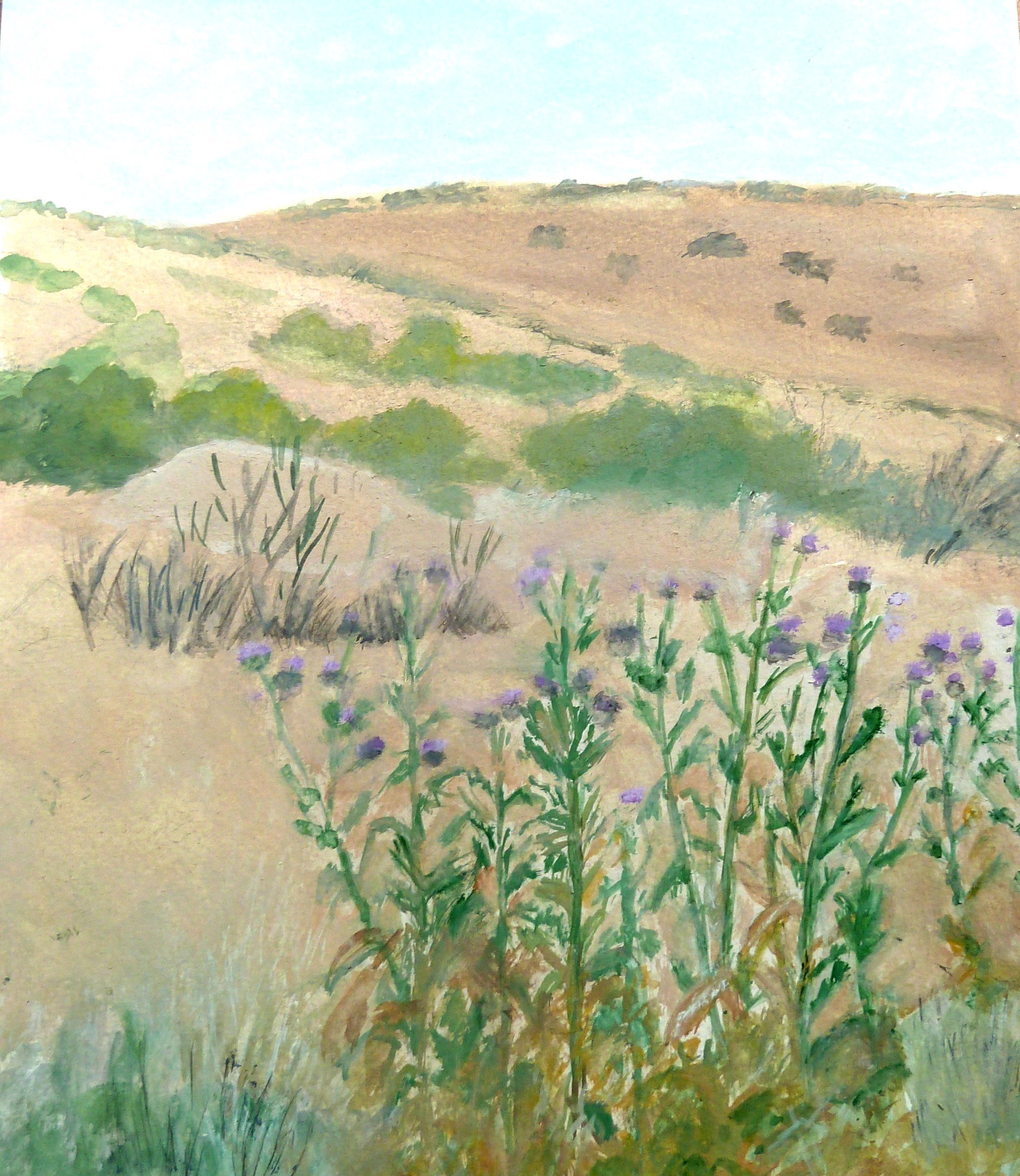 Thistles in sand hills